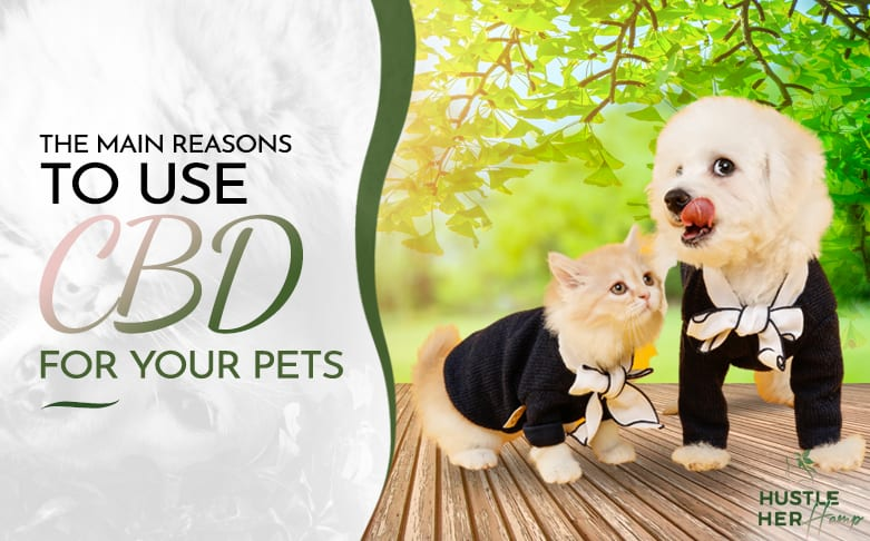 The Main Reasons to Use CBD Products for Your Pets